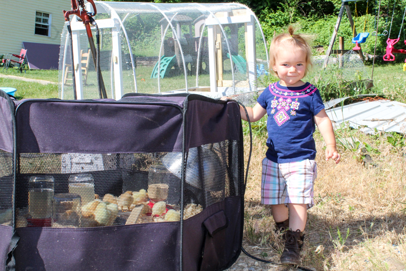 shelby standing next to the brooder