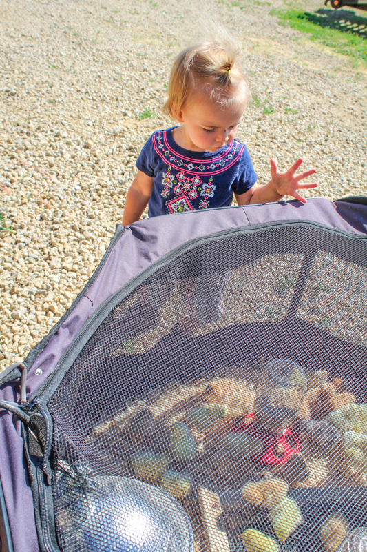 shelby looking at the baby chicks
