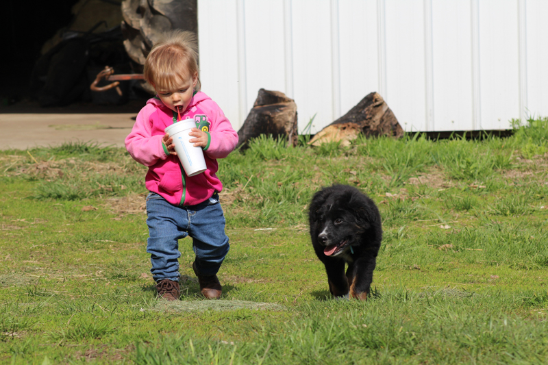 little girl drinking a slushy walking outside with a dog at the cattle farm