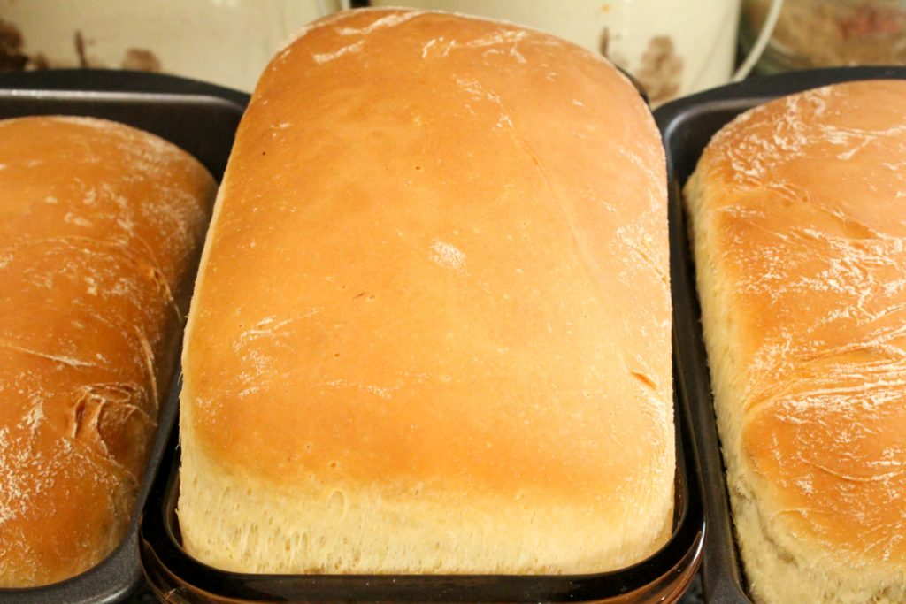 Three baked loaves of sandwich bread in their loaf pans on a cooling rack. The middle loaf rose the most and is larger than the two on either side of it.